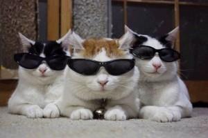 gatti-da-sole