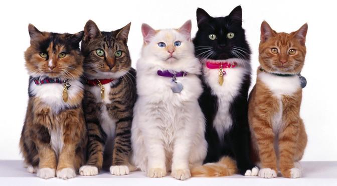 Gattini Temporali Preview