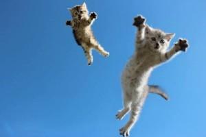 gattini-saltano